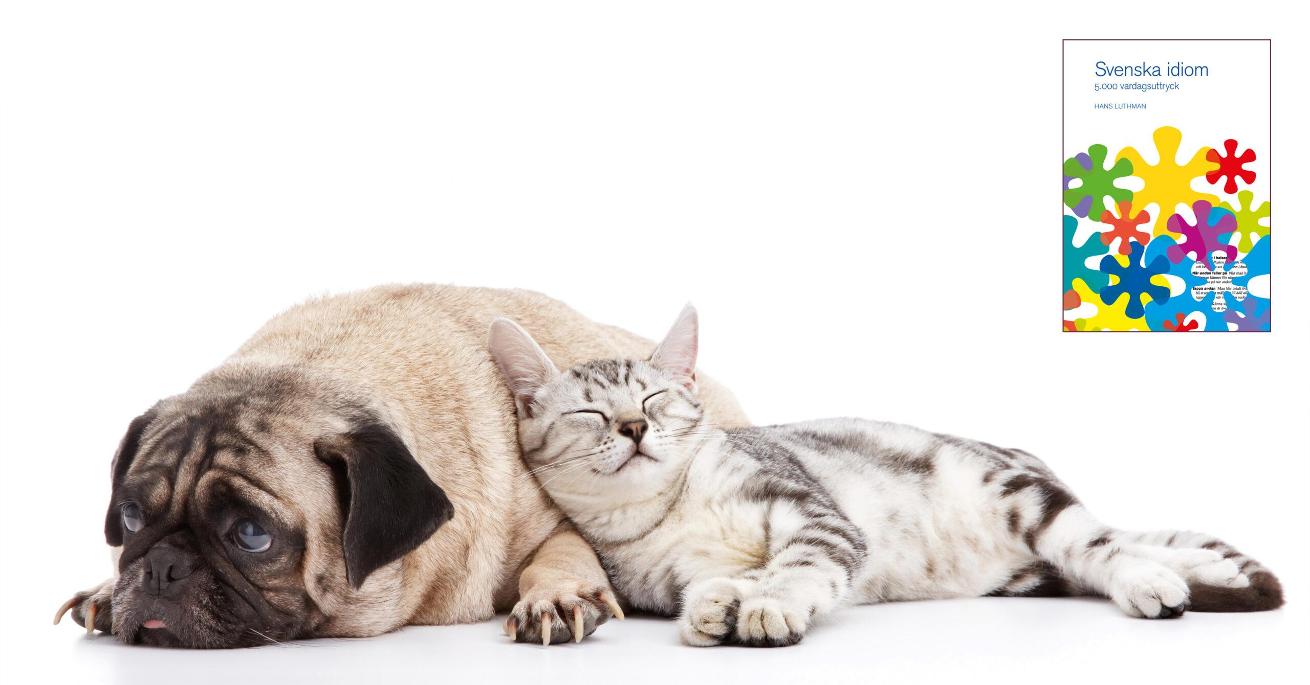 Vara som hund och katt? Foto: Ong Kok Keat/depositphotos.com.
